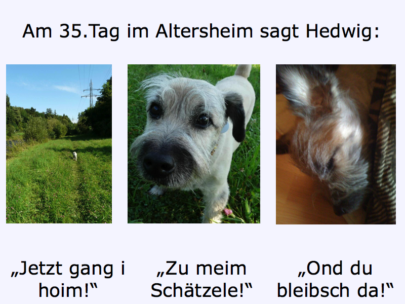1.5 Hedwig Heimweh5