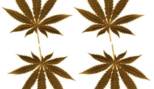 Cannabis sativa oder die Tischdecke meiner Großmutter